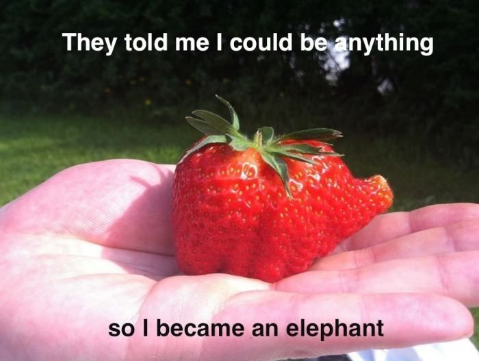 I could be anything: Dreams Big, Funny Pics, Elephants Strawberries, Funny Pictures, Funny Stuff, Funnies, Dreams Coming True, Funny Memes, Strawberries Elephants