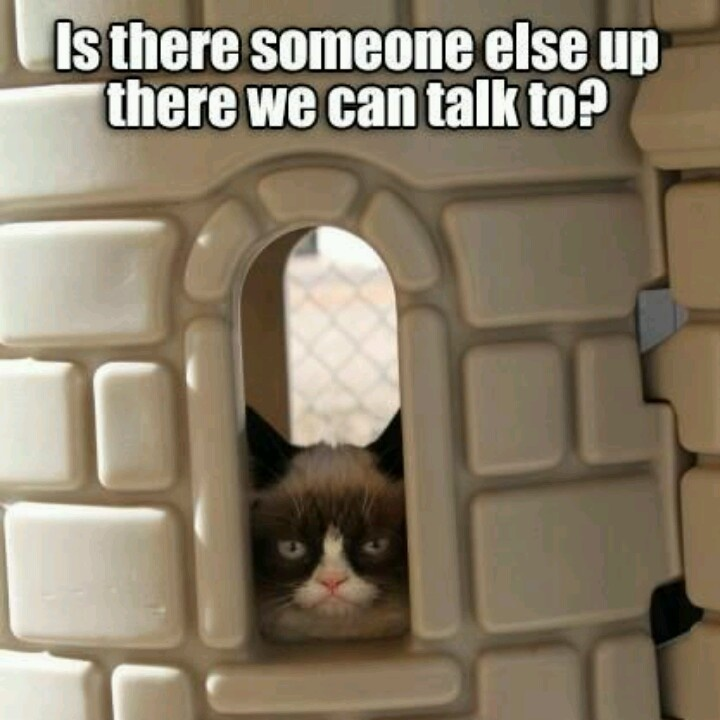 grumpy cat wedding invitations%0A Okay I do find angry cat funny most of the time  I find this picture of angry  cat in a castle really cute  I could see our cat doing th
