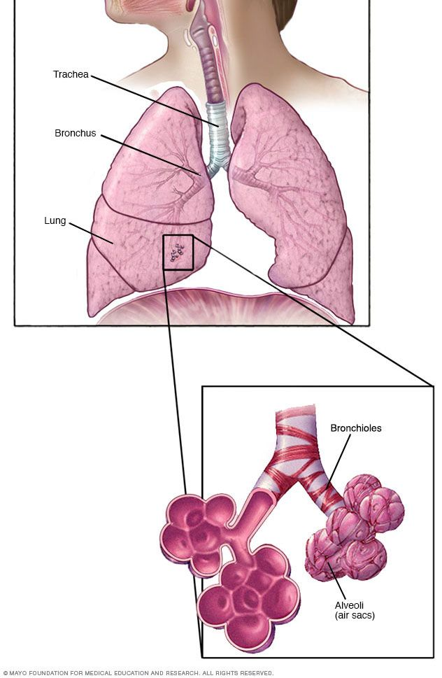 34 best Respiratory System images on Pinterest | Respiratory system ...