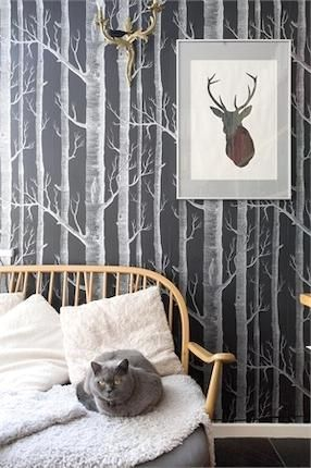 tree wallpaper. like the wallpaper not the antlers. and would just do one wall of wallpaper and paint the rest of the walls in a room
