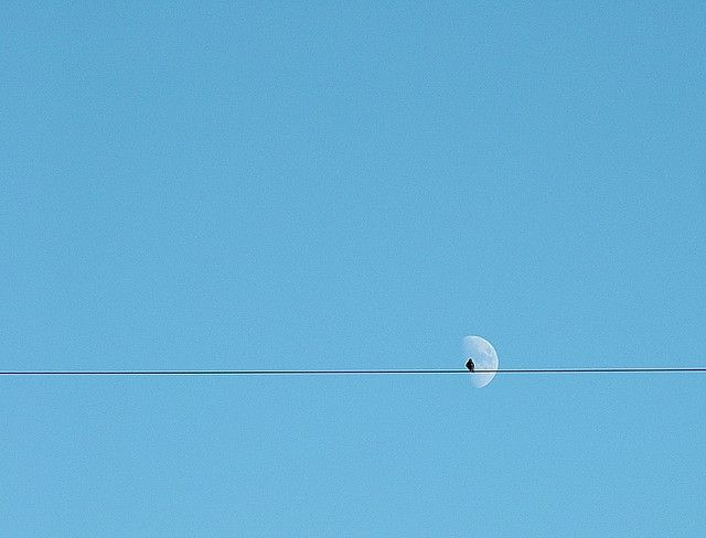 beautiful 'minimalist' photos of birds: Minimal Photos, Birds Jpg, 15 Breathtak, Minimal Photography, Beautiful Minimalist, Natural Backdrops, Breathtak Example, Photography Ideas, The Moon