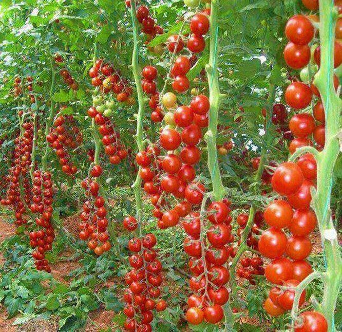 Beautiful hydroponic gardening systems recycling for Ideas for tomatoes from the garden
