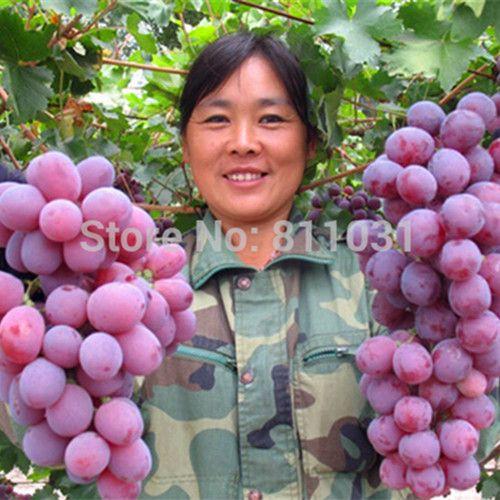Venta caliente 20 unids/lote Especies Raras Semillas de Uva Gigante Rojo Uvas Semillas Jardín de DIY Planta En Maceta Bonsai Fruta Fruta árbol
