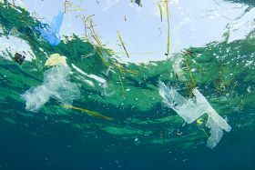 Plastic Found in a Sixth of Pelagic Fish in Mediterranean - The Fish Site