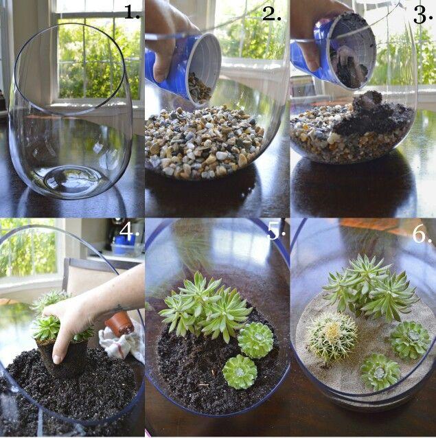 Succulent Terrarium, Plants