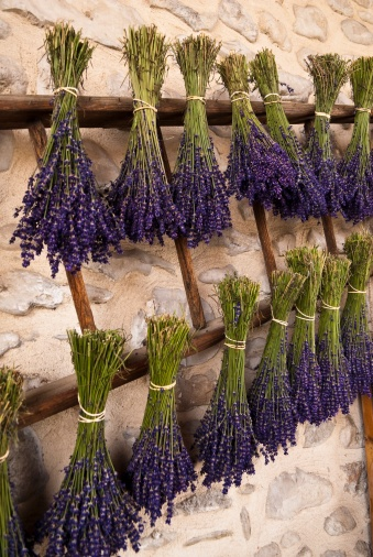 Title:  France, Drome, Nyons, lavender bouquet hanging on rack  Caption: France, Drome, Drome, Nyons, bouquets of lavender local    Photographer:  GIUGLIO Gil / hemis.fr