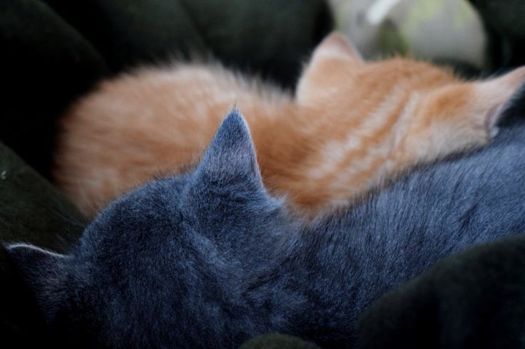 #cute animals#beautiful#cat#sandy&pandy#lovecat