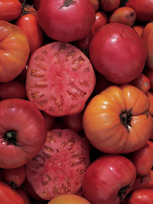 12 tomato growing tips