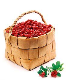 Pick wild berries in Finland!
