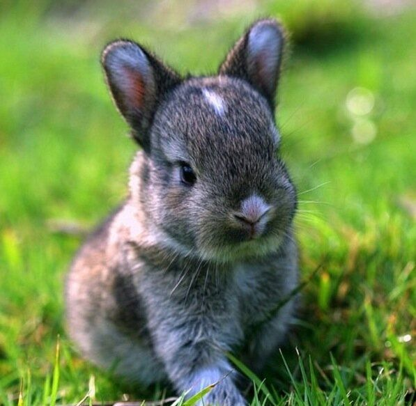 FARMHOUSE – ANIMALS – springtime is a time for renewal and rebirth on the farm, a baby bunny.