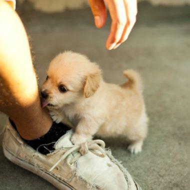 Cute Baby Golden Retriever Puppy So Cute Cute Puppy Animals At Repinned Net
