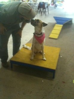 dog agility equipment construction instructions