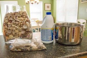 How to clean and preserve sea shells