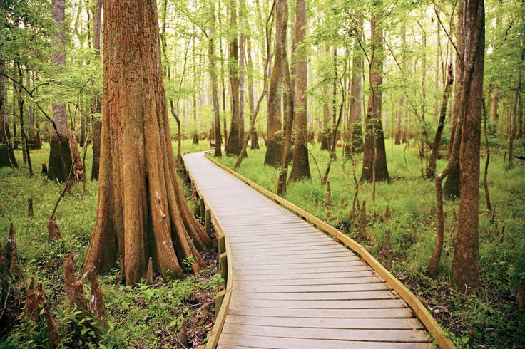 The South's National Parks: Boardwalk Loop Trail Congaree National Park