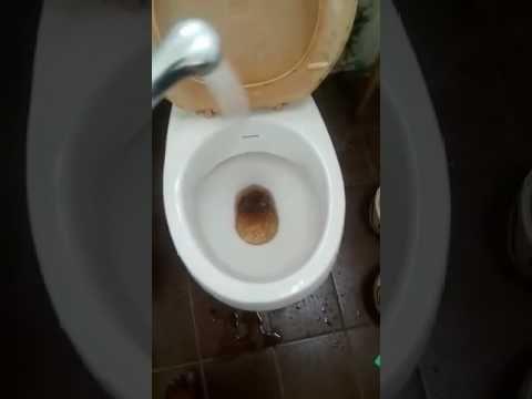 Incrostazioni nel WC addio con il trucchetto di AppuntiCreativi!! | Natural antiscale - YouTube