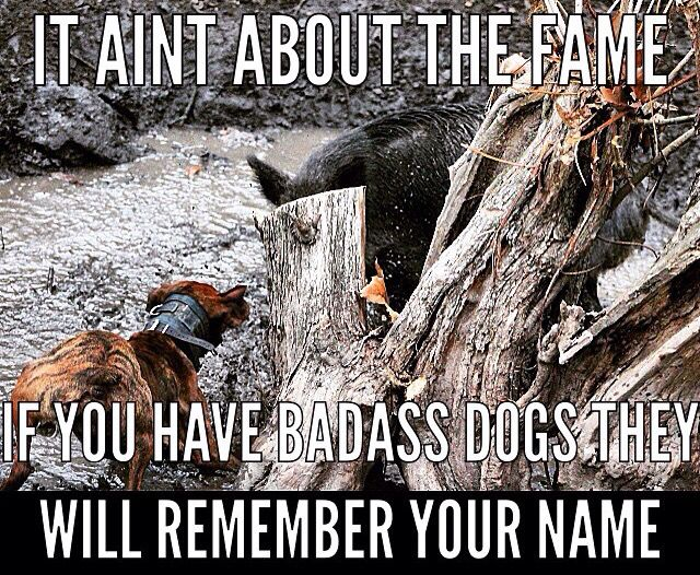it aint about the fame bear chasin hog dog walker