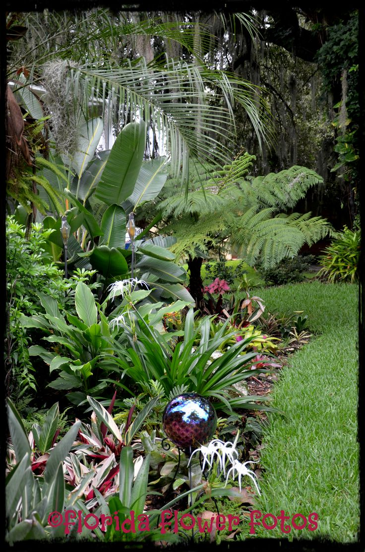 The Tropical Shade Garden