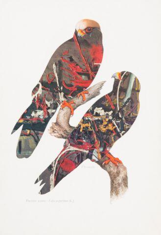 Kolář Jiří (1914–2002) | Poštolka rudonohá, z cyklu Ornitologie moderního umění | Aukce obrazů, starožitností | Aukční dům Sýpka