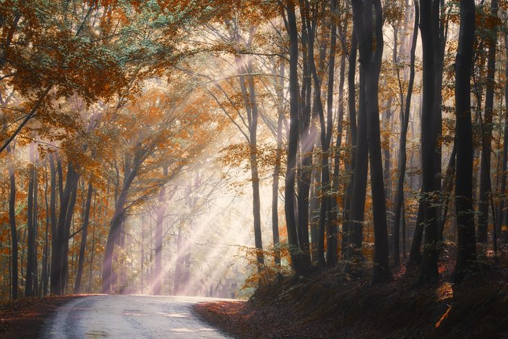 FineArtSeen - They coming from heaven by Janek Sedlar. This beautiful limited edition landscape photograph is full of colour and comes from Janek Sedlář's collection on FineArtSeen. Click to view more art at great prices from the Home Of Original Art. << Pin For Later >>