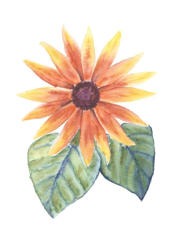 Sonnenblume Ursprungliche Blumenaquarellmalerei Botanische Illustration Des Aquarells Bedr Blumen Aquarell Botanische Illustration Illustration