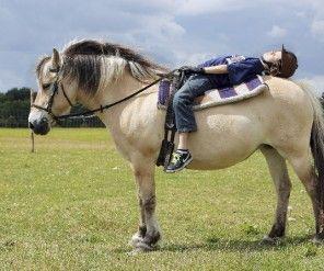 Bewezen: Paard maakt je rustig.    (Verzorgen van allerlei dieren, dus ook bijv. honden/konijnen verlaagt de stress).