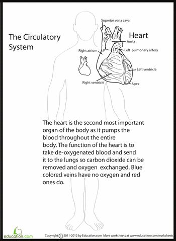 Printables Ged Science Worksheets 1000 images about human biology on pinterest worksheets anatomy heart