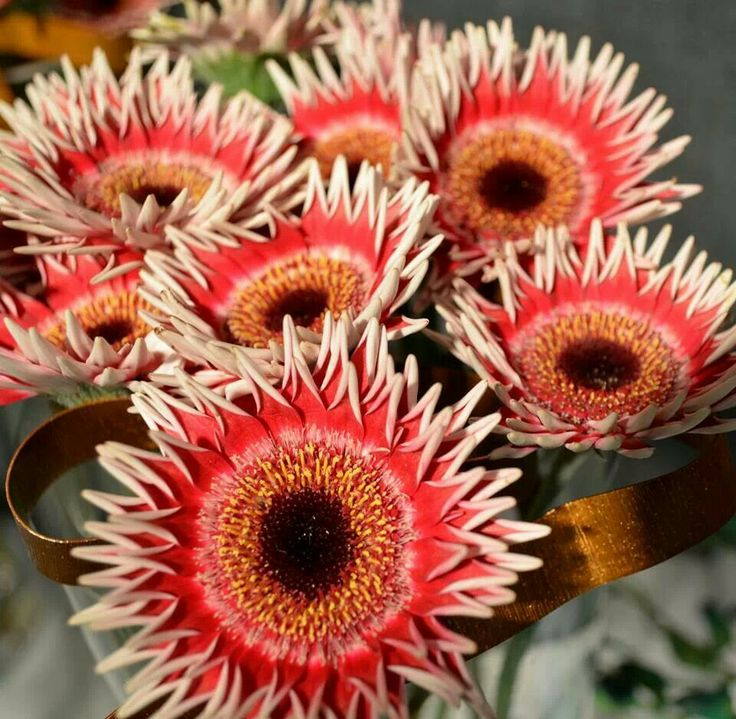 72 besten Gerbera Daisies - My FAVORITE Flower Bilder auf Pinterest ...