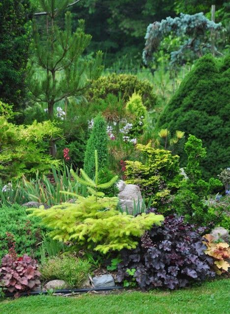 831 Best Conifer Garden Images On Pinterest Evergreen 640 x 480