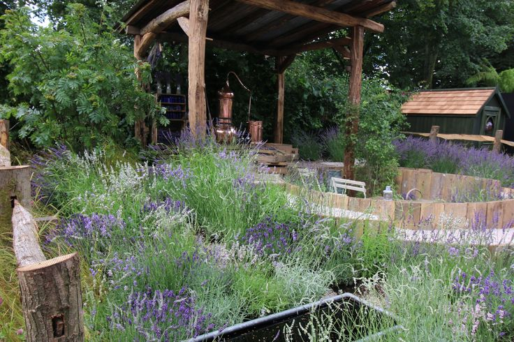 Lavender Garden at 2016 Hampton Court Flower Show.  For more about Lavender see our lavender course or ebook http://www.acs.edu.au/courses/lavender-159.aspx