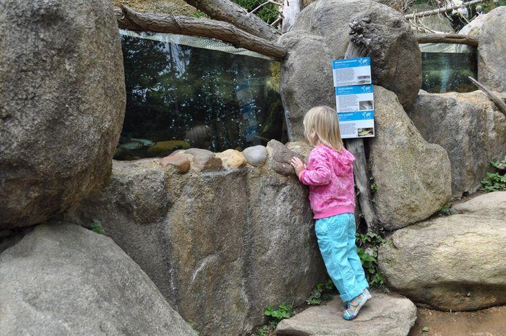 Zoo Plzeň v sobotu po zimě otevře Českou řeku. Nebude chybět vodník