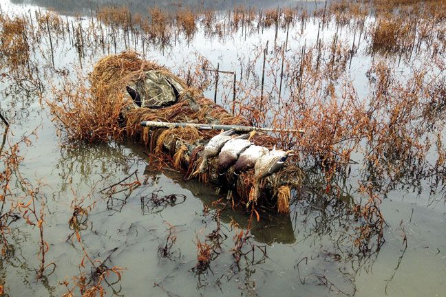 how to get started duck hunting
