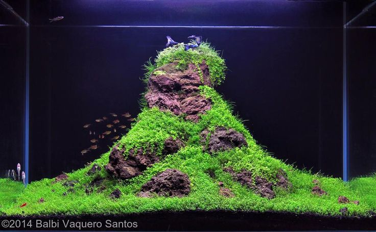 Best Aquascaping Freshwater 044