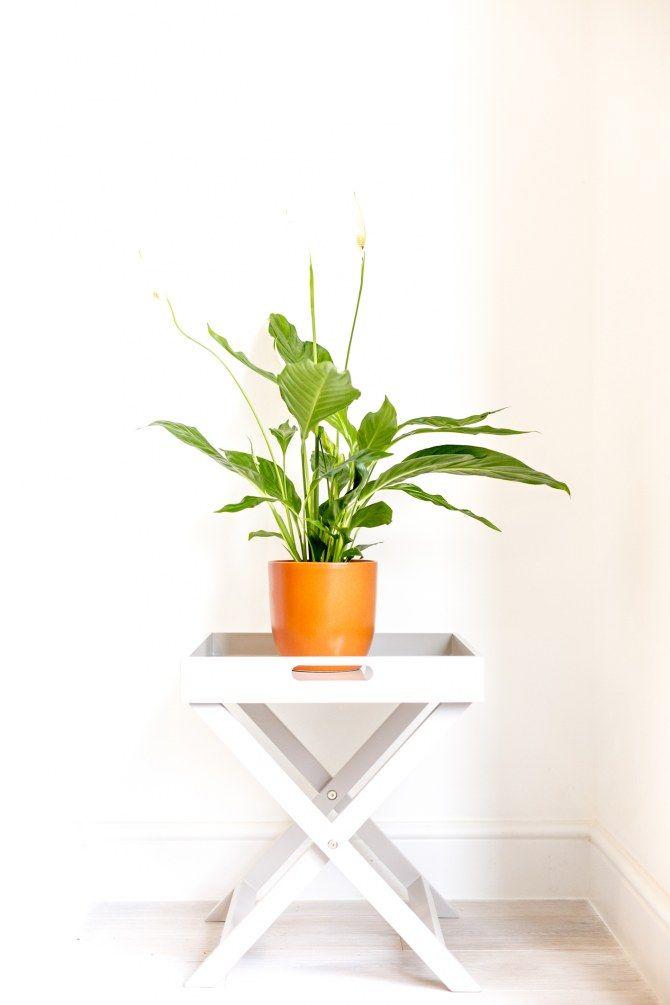 Quelle plante avoir dans la chambre d co int rieure plante chambre deco chambre et chambre - Plante dans la chambre ...