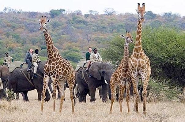 Doing a safari on the back of an elephant.