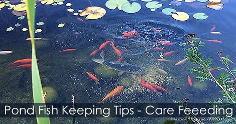 12 best pond building steps images on pinterest backyard for Koi pond water quality levels
