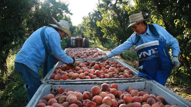 Hunger in the Valley of Plenty: nvestigates the Hunger Epidemic in California's Central Valley