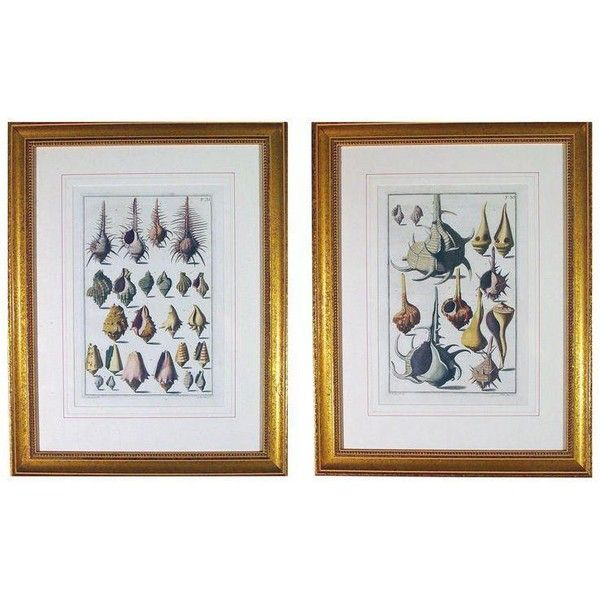 Niccolò Gualtieri Framed Copperplate Engravings of Sea Shells - a Pair (105 775 UAH) ❤ liked on Polyvore featuring home, home decor, prints, engraved plates, texture plates, seashell home decor, sea shell plates and seashell plates
