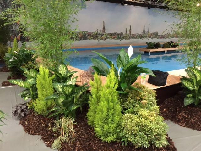 Kanuwelt, Dekoration Hamburg Messe, decoration fair, plants for pool, conifer