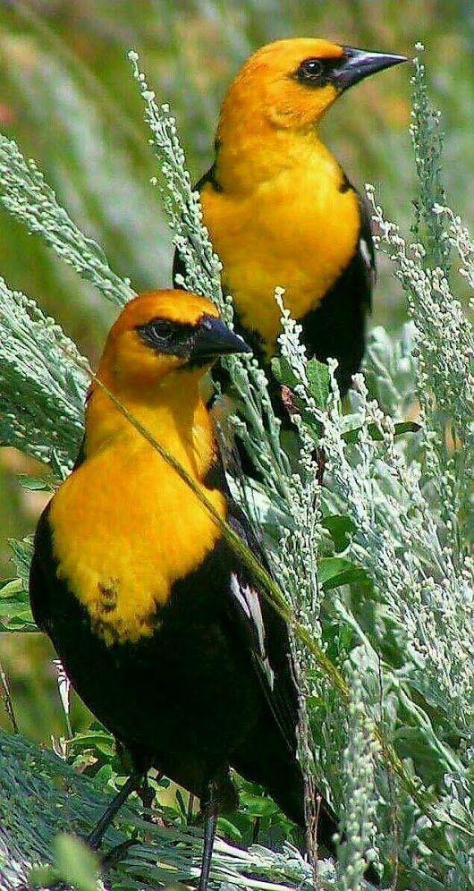 25+ beste ideeën over Exotische vogels op Pinterest - Prachtige ...