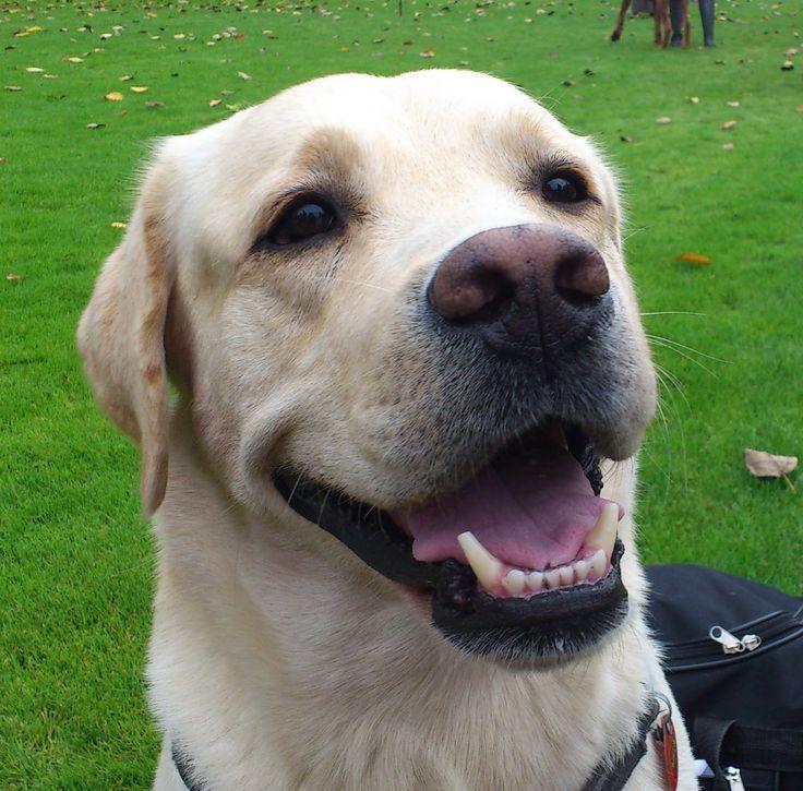 Jak wychować szczęśliwego psa: Pies w domu - poradnik