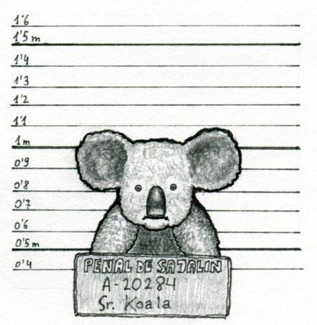 Killer koala after being arrested.
