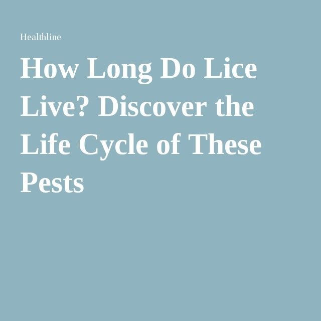 25 Best Ideas About Lice Life Cycle On Pinterest