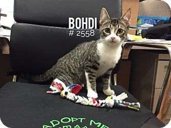 Adoption cat in up texas for putting
