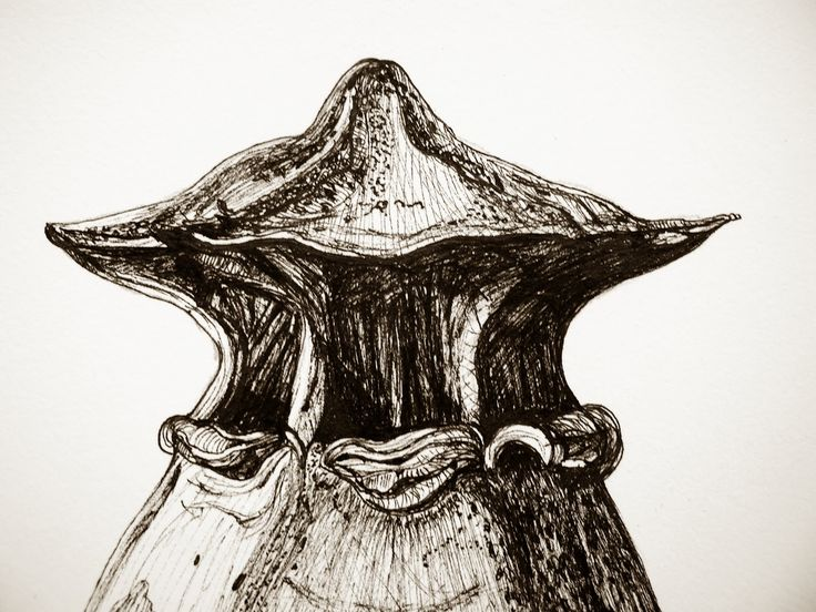 Картинки по запросу art forms of nature