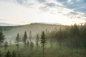 När dimman vaknar