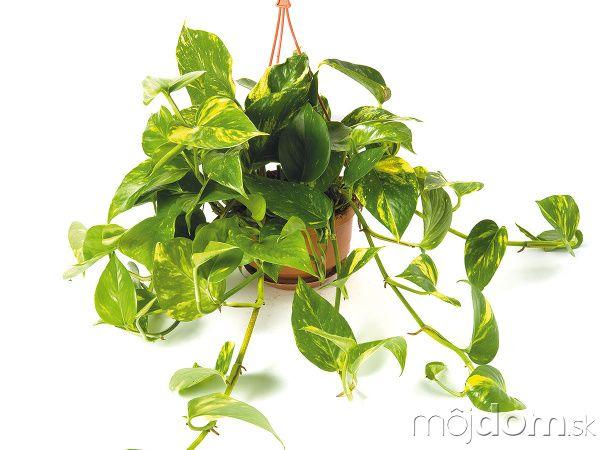 Viete, ktoré rastliny vás doma ochránia pred škodlivými látkami?
