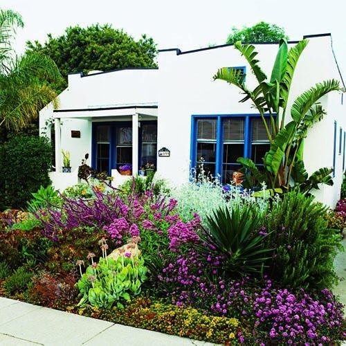 Drought Tolerant Front Yard: Succulents And Drought-tolerant Perennials.