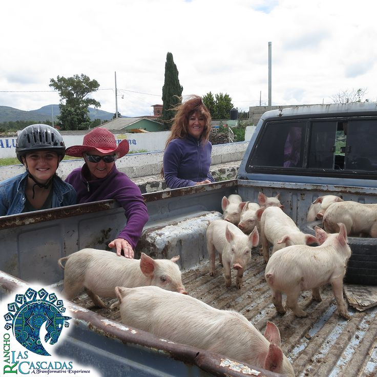 Exploring and finding new surprises… charming piglets!  http://rancholascascadas.com/