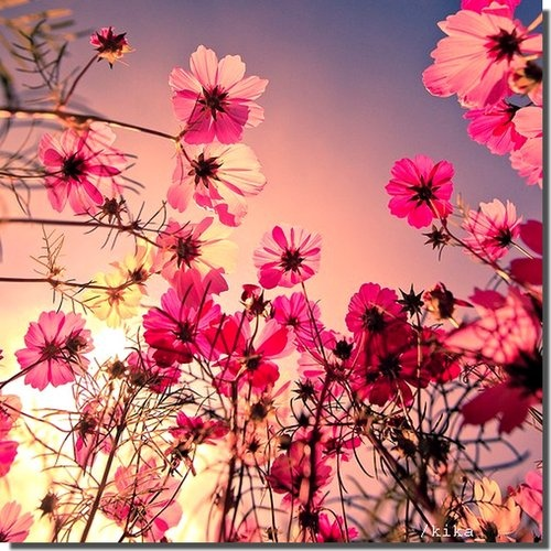 Earth Laughs in Flowers (R.W. Emerson)