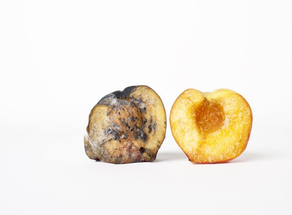 Rotting Fruit: Photoshoot made to show the contrast between health and decay. Fruit is not actually decaying but made to look so by use of mixed media